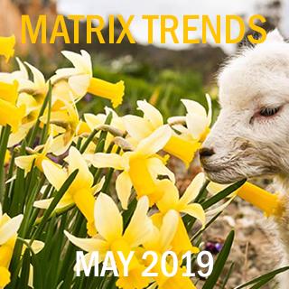 Matrix Trends May 2019 Assets